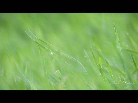 Шепот травы... Энергия Растительного Царства. Осень. Молодые побеги травы.часть 3