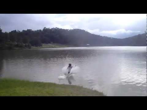 Бег по воде - реальность