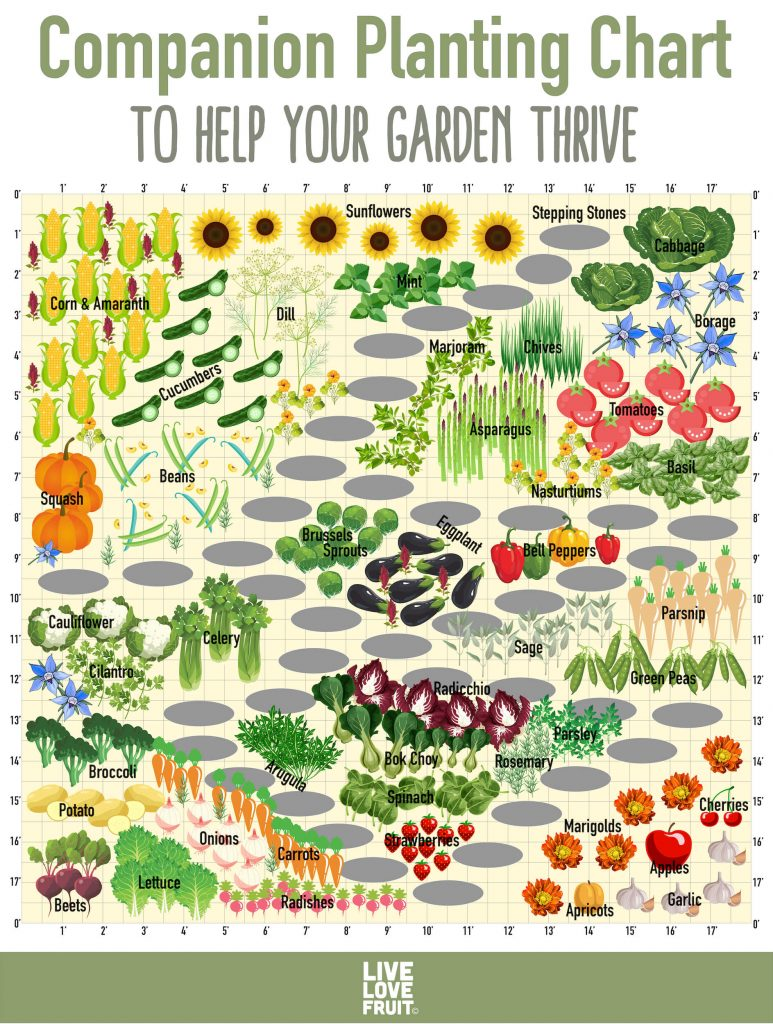 Use This Companion Planting Chart to Help Your Garden Thrive
