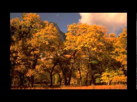 Autumn Leaves (free improvisation, not the famous one)