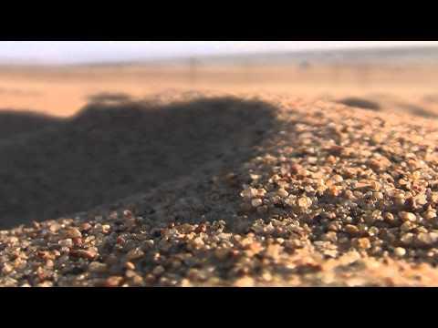 Saltation and Creep at Oceano Dunes