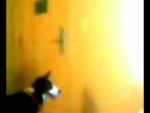 Sadie Escapes! Again!