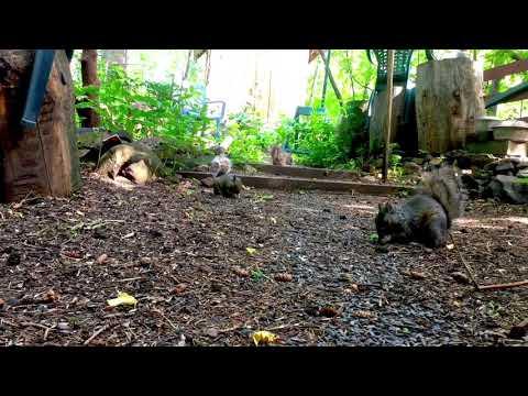 Squirrel Haven