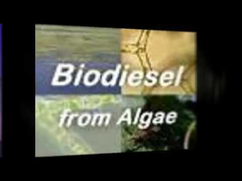 Making Algae PhotoBioreactors at Home!