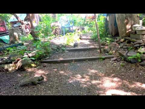 Squirrel's Picnic