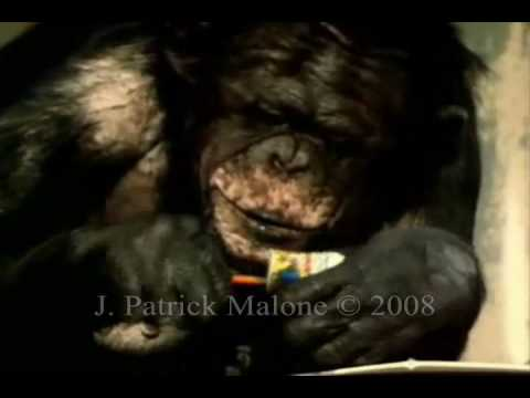 Great Ape Art and Self Expression.wmv