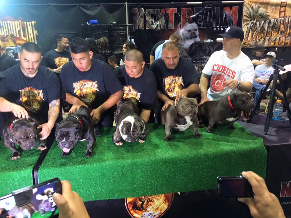 Ban on breeding of deformed dogs