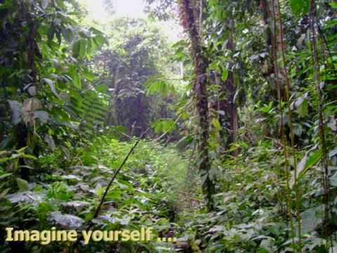 NWHS Touch The Jungle Rainforest Presentation