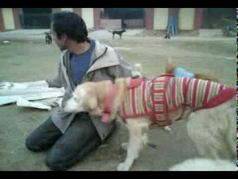 Love only animal spca noida