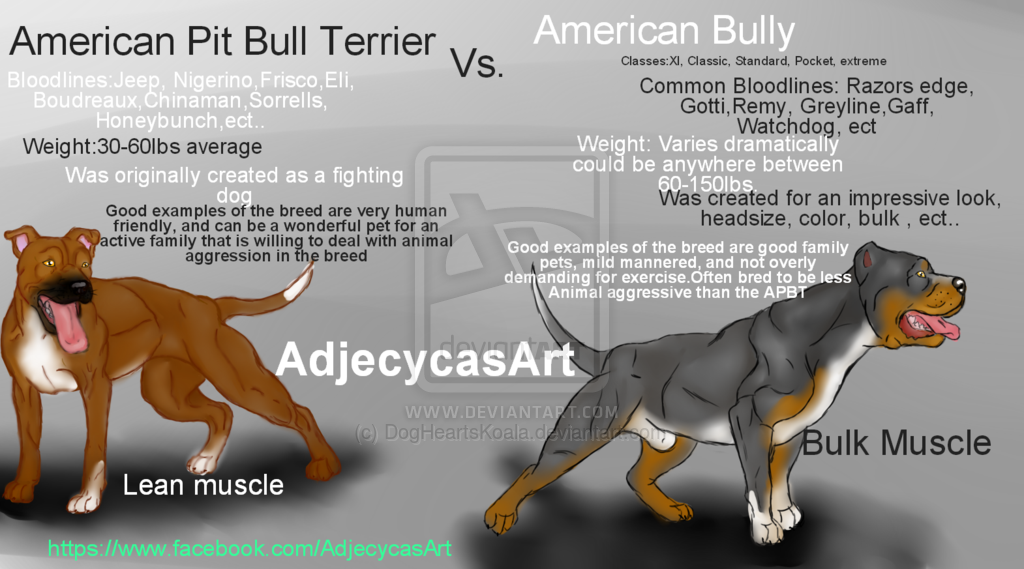 American Bully And The Pit bull Terrier Differences