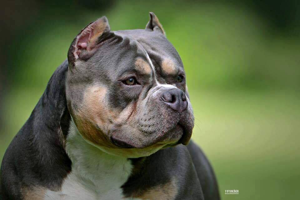 dogs - Blogs - This Is Bully
