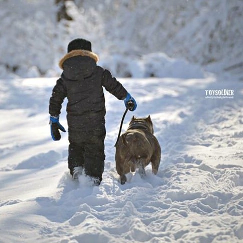 This states says,People who leave their dogs out in the cold can go to jail.