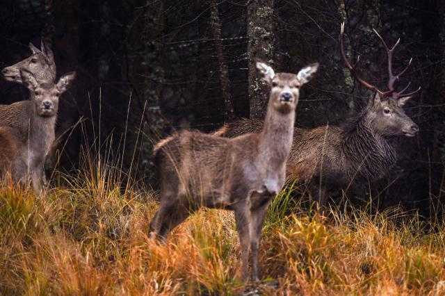 Woman Mistaken For Deer And Shot Dead While Walking Her Dogs