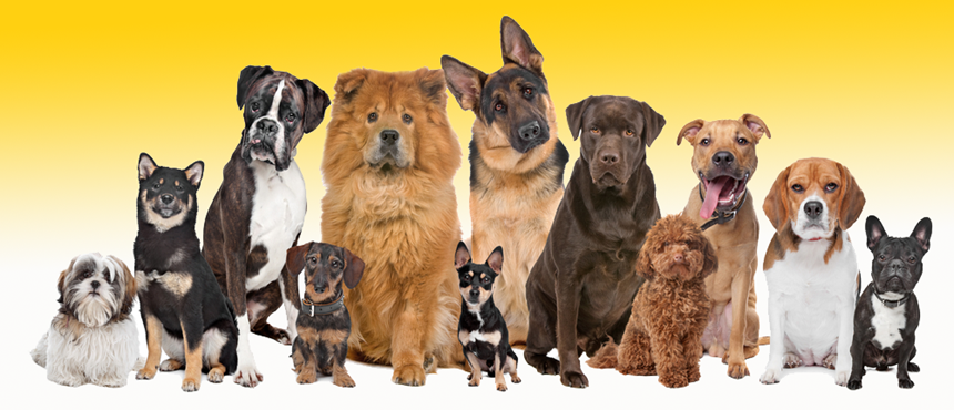 DOGS – TYPES AND BREEDING