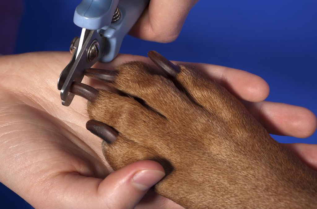 How often should you trim your dog's nails?