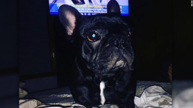 Family, United Airlines settle over dog's death