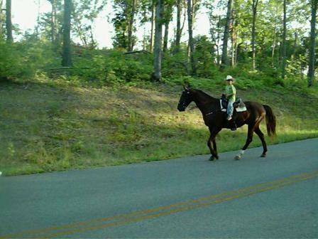 Austin and Samson Trail riding
