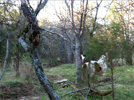 horses 2010 029