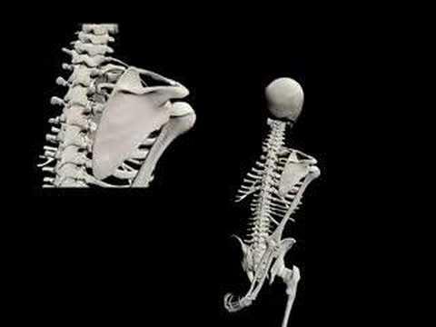 Biomecánica de la cintura escapular