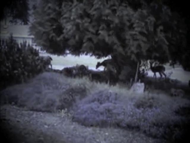 lullabye tones (Hawk Horses)