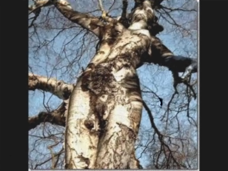pornograTree . --  yep  ...  tree porn