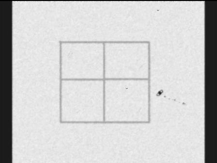 fly in a window
