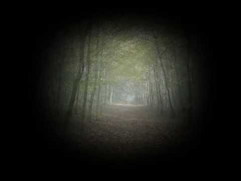 """""""The Forest"""" from the album """"Playing (No Rules)"""" OUT NOW!!!"""