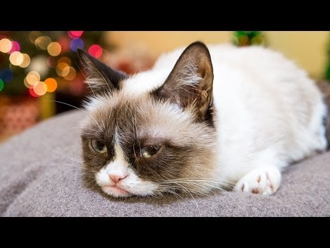 """Grumpy Cat Stars in """"Hard To Be a Cat at Christmas"""" Music Video"""