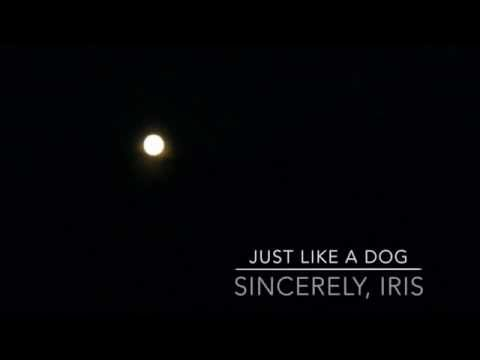 """""""Just Like A Dog"""" by Sincerely, Iris (Preview)"""