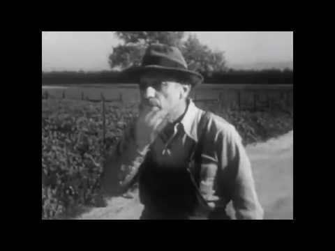 Travelling man -  a bug song