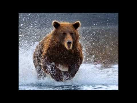 Running Thunder Bear    A D Eker  2016