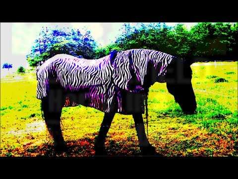 Cloverfield  Horse in a Zebra Dress    A D Eker 2017
