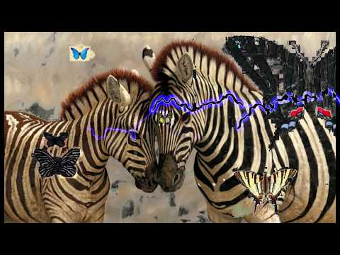 Butterflies & Zebra's         (a   tribute)       A.D.Eker  2018