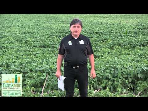 2014 Corn Belt Crop Tour - Illinois