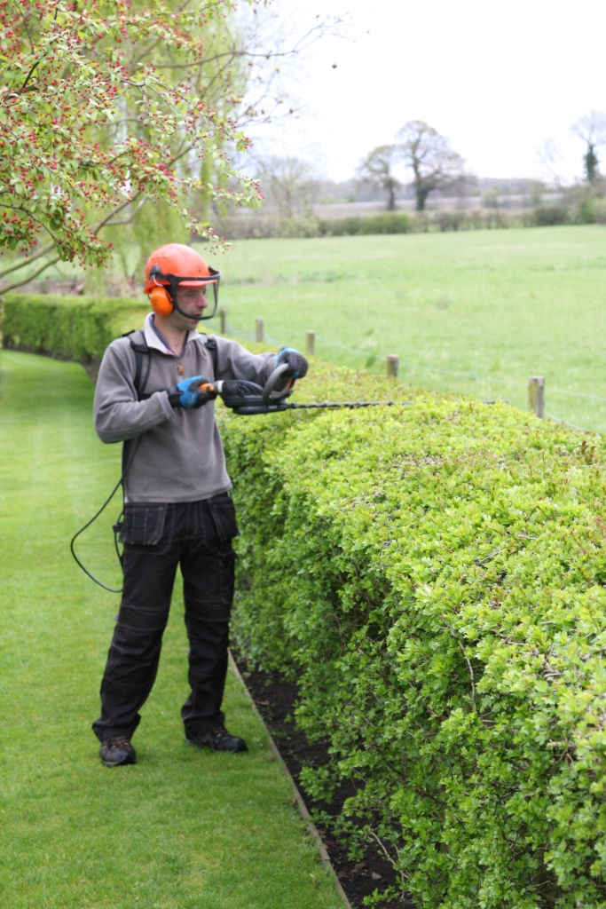 Using Pellenc hedge trimmer