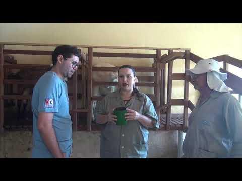 Prevenção de mastite caprina - 1ª parte