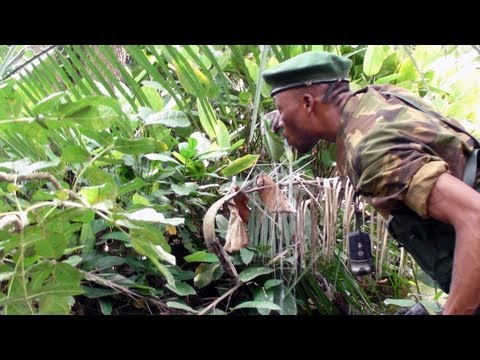 Kony's Ivory: LRA Poaching in Garamba National Park