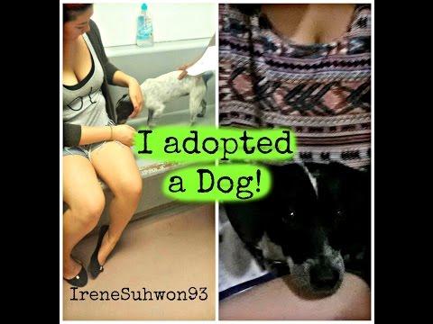 Vlog: Adopting Autumn | IreneSuhwon93