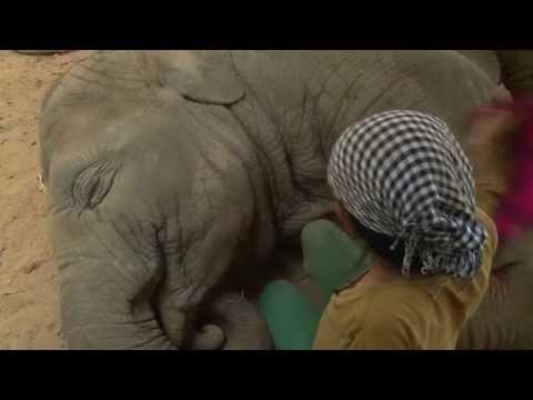 Lullaby to elephant