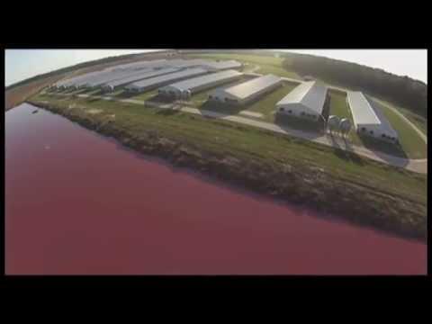 Spy Drones Expose Smithfield Foods Factory Farms