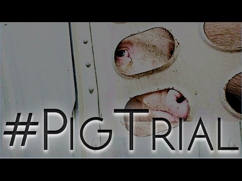 Pork Industry On Trial - Water For Pigs Charge Backfires