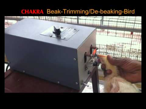 Beak Trimming, and this video was made by the company that sells the beak trimming machines shown!