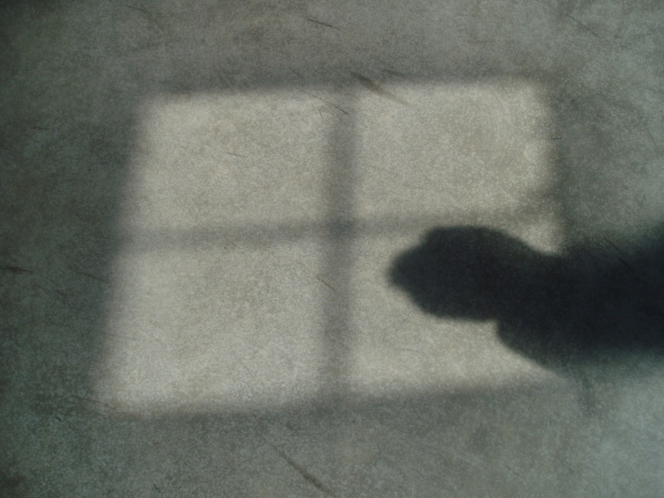 Untitled (shadow 5170076)