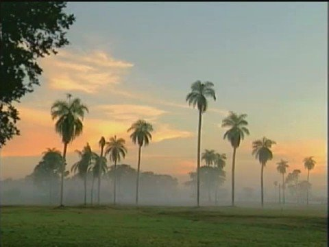 A música de Pantanal, ao vivo - Marcus Viana