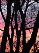 Javit's Park Sunset
