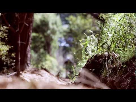 Mountain Biking Signal Hill to St Clair | Insiders Dunedin