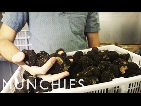 Meet New York's Youngest Truffle Dealer: Day with a Dealer