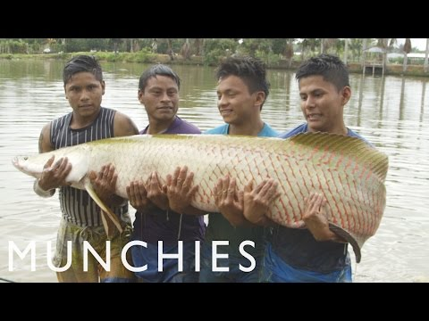 Amazonian Aphrodisiacs and Giant Paiche: Being Frank Peru (Part 2/2)