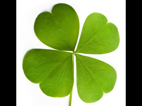 The Power of Luck in Business and in Life