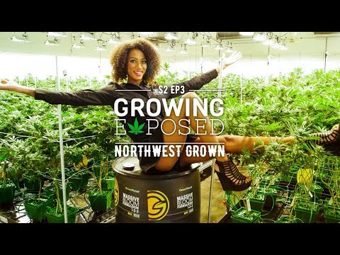 GROWING EXPOSED SEASON 2 EPISODE 3: Northwest Grown